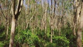 Vuelo a través del bosque del árbol en Sunny Summer Day almacen de metraje de vídeo