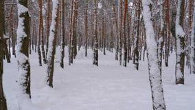 Vuelo a través del bosque de los pinos del invierno almacen de video