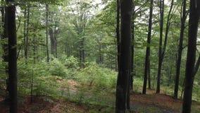 Vuelo a través del bosque - montaña Goc Serbia almacen de metraje de vídeo