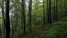 Vuelo a través del bosque - montaña Goc Serbia metrajes