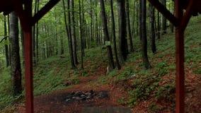 Vuelo a través del bosque - montaña Goc Serbia almacen de video