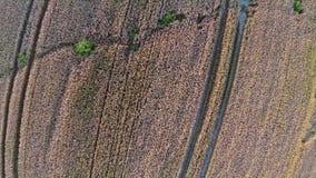 Vuelo y despegue sobre el campo de trigo, visión panorámica aérea Imágenes de archivo libres de regalías