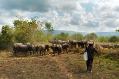 Vuelta de la gente al búfalo Imágenes de archivo libres de regalías