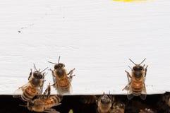 Vuelta de las abejas de la casa de madera blanca Fotografía de archivo libre de regalías