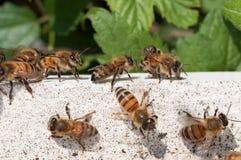 Vuelta de las abejas de la casa de madera blanca Foto de archivo