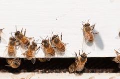 Vuelta de las abejas de la casa de madera blanca Fotos de archivo