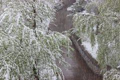 Vuelta del invierno, nevadas Hojas grandes verdes del covere de los abedules Foto de archivo