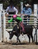 Vuelta del ` s de la vaquera Imagen de archivo