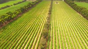 Vues aériennes de vignoble banque de vidéos