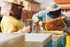 Vues d'une ruche d'abeille Apiculteur moissonnant le miel Le fumeur d'abeille est habitu? pour calmer des abeilles avant le retra photo stock