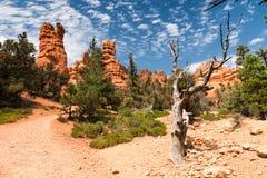 Vues de canyon rouge de roche, Nevada/roche rouge Images libres de droits