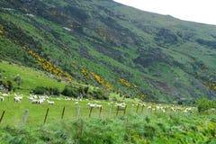 Vues de montagne et moutons de pâturage photographie stock