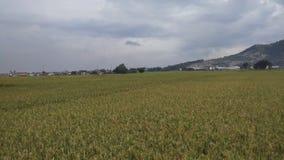 Vues de paysage des gisements de riz avec le beau fond de montagne photographie stock libre de droits