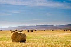 Vues de prairie photographie stock