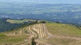 Vues de raisin du comté de Sonoma Images libres de droits