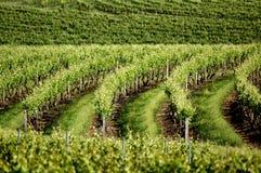Vues de vigne Images libres de droits