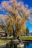 Vues de ville d'aroubd, poisson à chair blanche, Montana, Etats-Unis photos libres de droits