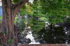Vues des arbres et des aspects uniques de nature entourant la Nouvelle-Orléans, y compris les piscines se reflétantes dans les ci image stock