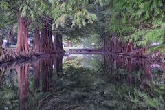 Vues des arbres et des aspects uniques de nature entourant la Nouvelle-Orléans, y compris les piscines se reflétantes dans les ci photographie stock