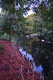 Vues des arbres et des aspects uniques de nature entourant la Nouvelle-Orléans, y compris les piscines se reflétantes dans les ci images libres de droits