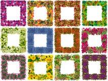 Vues des fleurs d'isolement Images stock