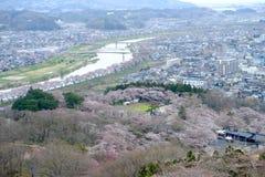Vues des fleurs de cerisier chez Shiroishi RiversideHitome Senbonzakura ou mille cerisiers à vue et chaîne de montagne de Zao vue Photos libres de droits