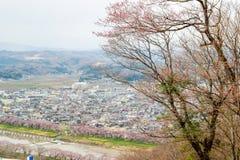 Vues des fleurs de cerisier chez Shiroishi RiversideHitome Senbonzakura ou mille cerisiers à vue et chaîne de montagne de Zao vue Images libres de droits