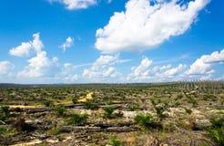 Vues des plantations d'huile de palme Images libres de droits