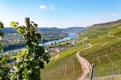 Vues des vignobles le long de la Moselle, Allemagne images libres de droits
