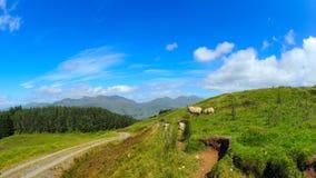 Vues panoramiques des montagnes écossaises Photo libre de droits