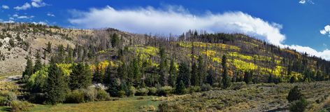 Vues tôt de forêt de panorama d'automne de fin d'été augmentant par des arbres dans le canyon indien, la boucle de canyon de Neuf images stock