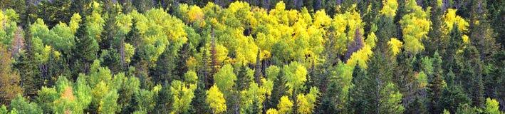 Vues tôt de forêt de panorama d'automne de fin d'été augmentant par des arbres dans le canyon indien, la boucle de canyon de Neuf image stock