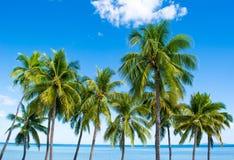 Vues tropicales sur la plage des Fidji photos libres de droits
