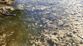 Vuil bemost watermoeras en bemost water stock video
