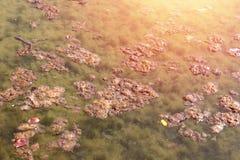 Vuil rioleringsmeer met organische verontreiniging Neem nota van het groene water Royalty-vrije Stock Foto's