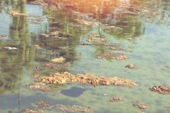 Vuil rioleringsmeer met organische verontreiniging Neem nota van het groene water Royalty-vrije Stock Foto