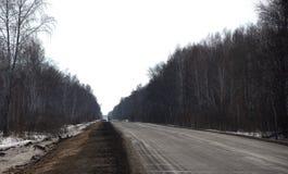 Vuile asfaltweg in het bospanoranic-schot stock foto's