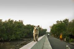 Vuile de hondtribune van het hondhuisdier op muur bij een strand in Thailand, proceskleur Royalty-vrije Stock Foto's