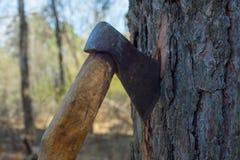 Vuile houthakkersbijl in boom royalty-vrije stock foto's
