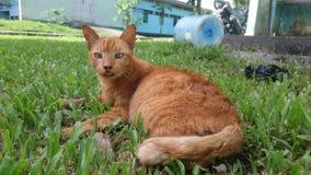 Vuile kat stock afbeelding