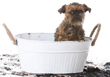 Vuile modderige hond royalty-vrije stock foto's
