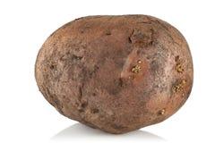 Vuile, ongewassen aardappel Stock Foto's