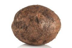 Vuile, ongewassen aardappel Stock Foto