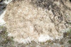 Vuile Sneeuw Royalty-vrije Stock Afbeelding