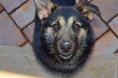 Vuile van een hond Royalty-vrije Stock Foto's