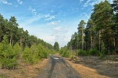 Vuile weg in bos vóór lange pijnbomen Royalty-vrije Stock Fotografie