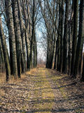 Vuile weg door het lokale bos in Servië stock fotografie
