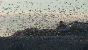 Vuilnisuiteinde met duizenden meeuwen over afvalvrachtwagen stock footage