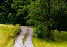 Vuiloprijlaan en boom op een grasrijke heuvel Stock Afbeeldingen