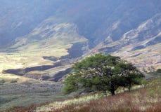 Vulcão de Haleakala fotografia de stock royalty free